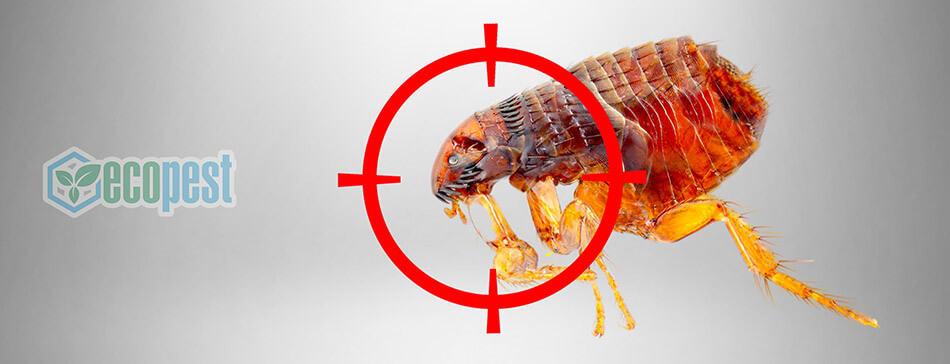 Hantox-200 Thuốc diệt bọ chét