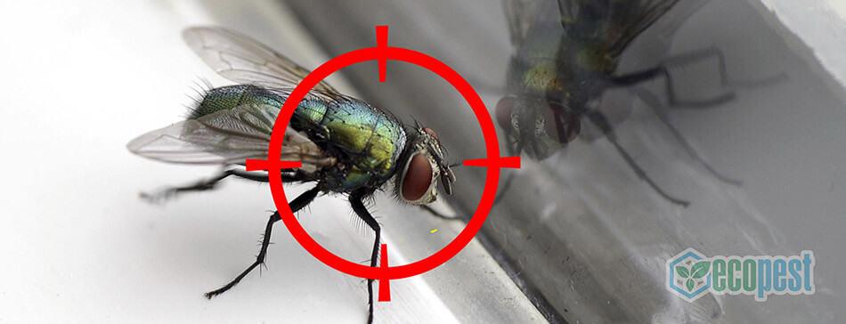 Hantox-200 Thuốc diệt ruồi nhặng
