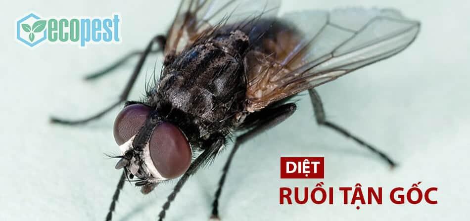 Permecide 50EC thuốc diệt ruồi tận gốc