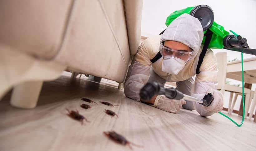 Hình ảnh: Phun thuốc diệt muỗi tại nhà