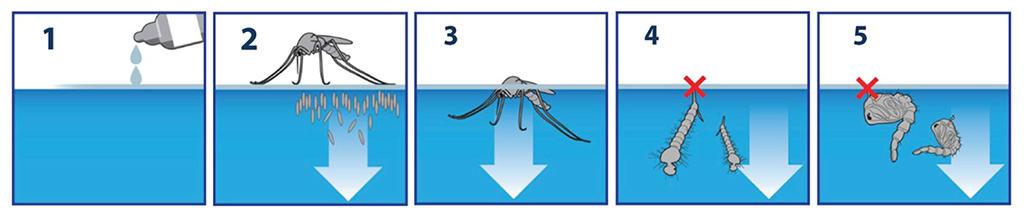 AquaStrike VCF diệt bọ gậy, lăng quăng