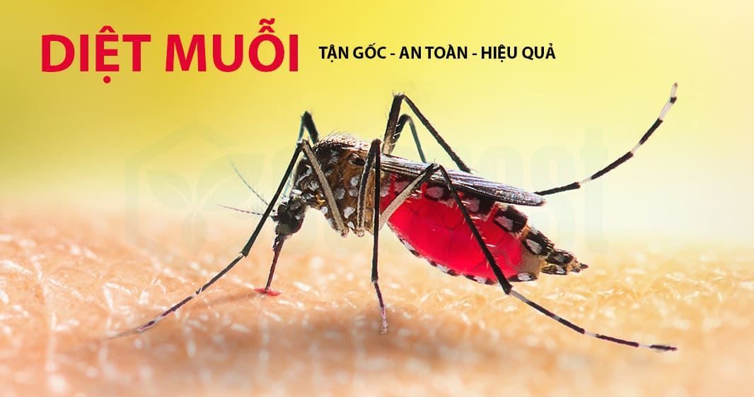 Diệt muỗi tận gốc an toàn, hiệu quả